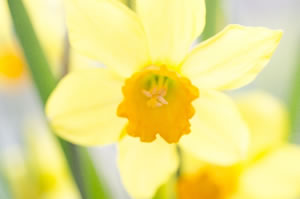 springflower07