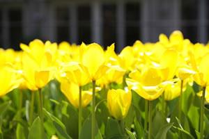 springflower09